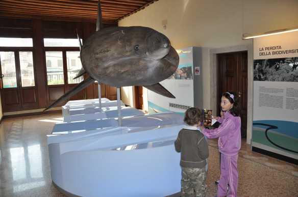 Olivia lo squalo elefante