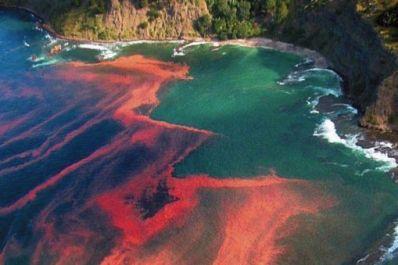 Red-tide_full_size_landscape