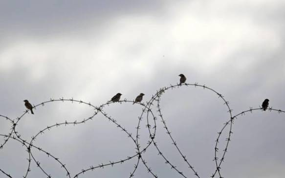 Birds rest on the barbed wire at the border between Egypt and Gaza Strip